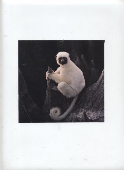 lemur 001