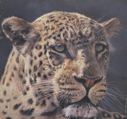 leopard 001