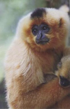 monkey II.jpg